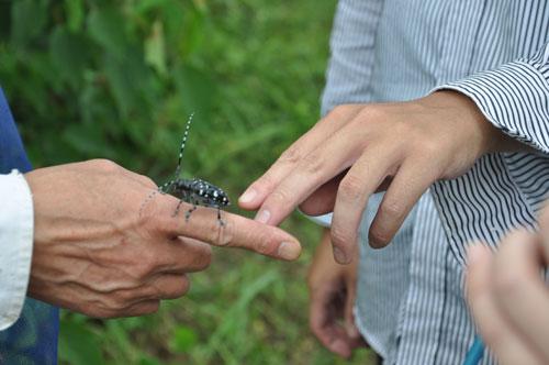 昆虫との遭遇